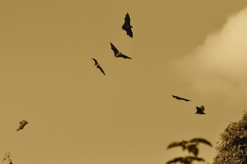 Il Po e le leggende - Pipistrelli sul fiume