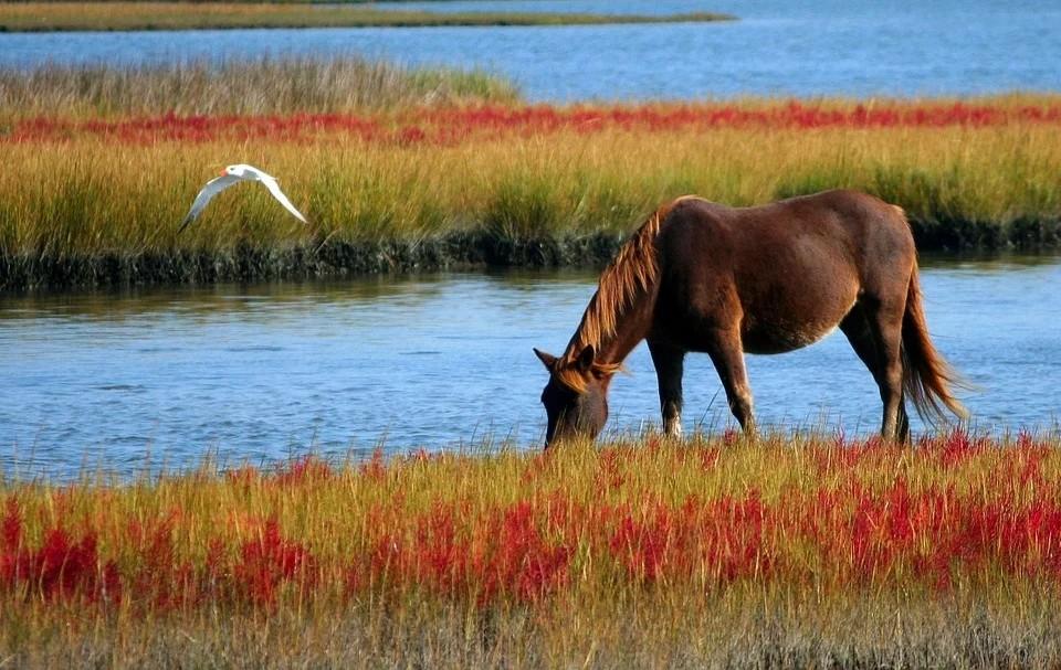 Don riccardo - Cavallo che bruca