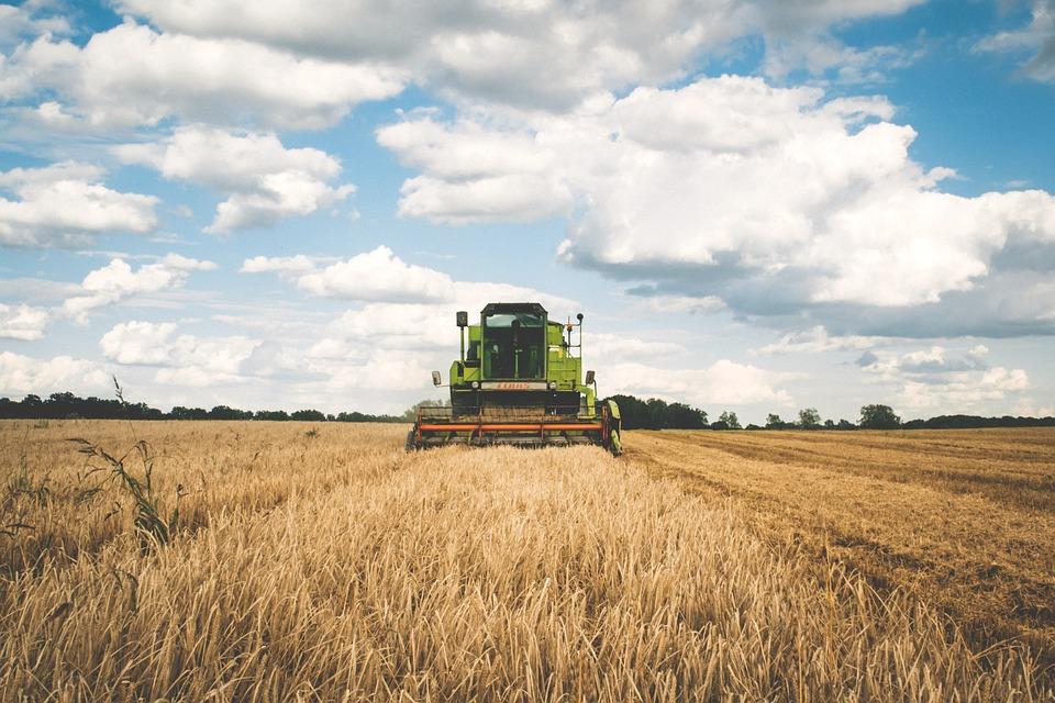Don riccardo - Trattore la lavoro sul grano