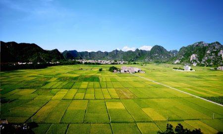 Emigrazione veneta in territorio pontino e bonifica pontina - Latifondi coltivati