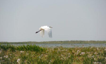 Erbe del Delta del Po - Uccello Che Vola sul delta del Po
