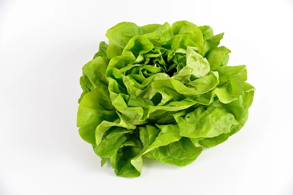 Insalata di Lusia IGP - un cespo di insalata                       Insalata In Cespo
