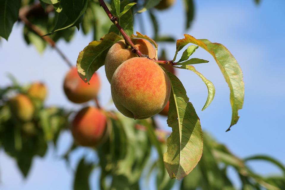Frutta E Verdura Di Giugno Pesche