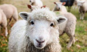 10 Dicembre Giornata Mondiale Animali