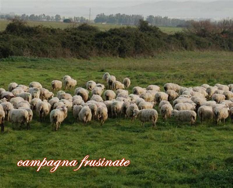 Pastore Gregge Pecore 1