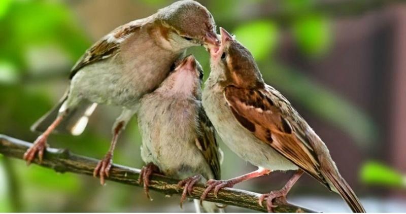 la passerina del frusinate-passeri