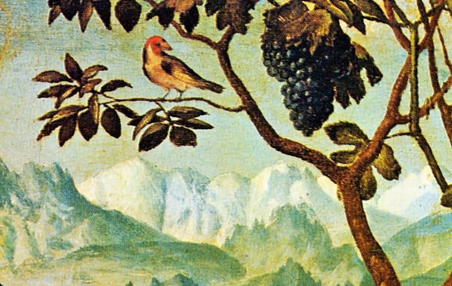 passerina del frusinate- uccellino