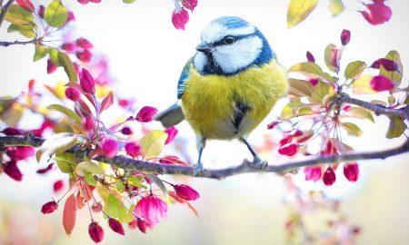 la campagna ciociara di aprile - uccellino a Primavera