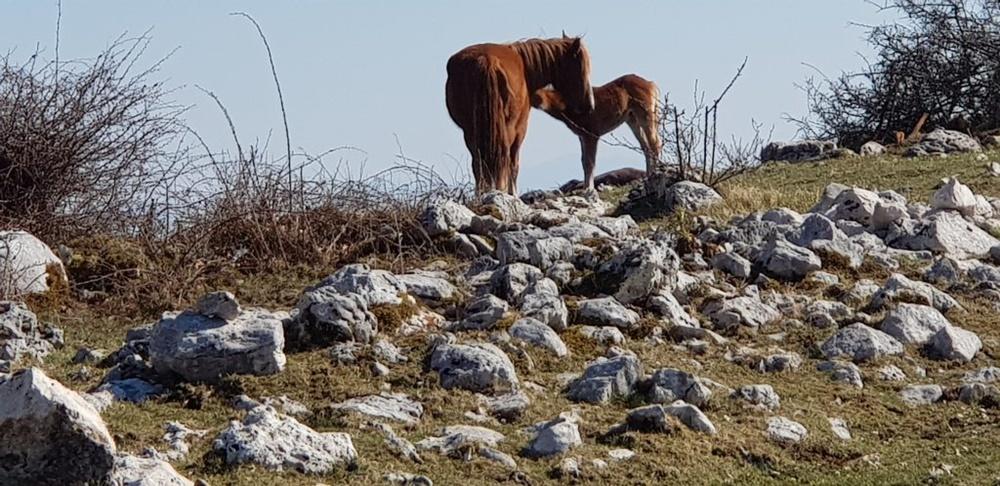 monte serra alta - Cavalli al pascolo