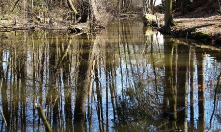 il fiume Sacco - Fiume Con Alberi