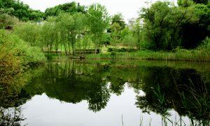 il laghetto di Maniano - Laghetto Di Maniano vosto da Frosinone