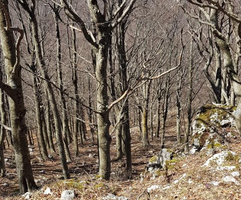Monte serra alto - Monte Serra Salita