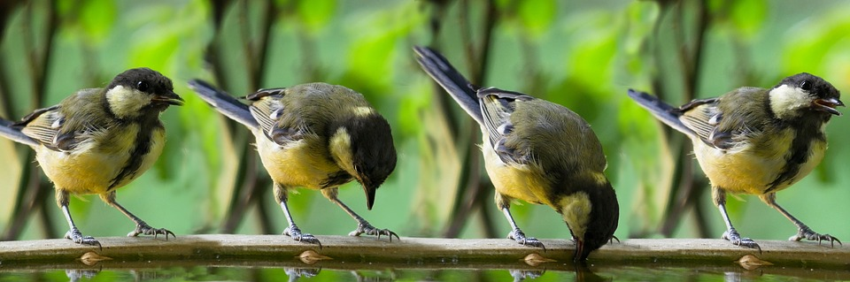 i lavori in campagna a giugno - Uccellini su un ramo