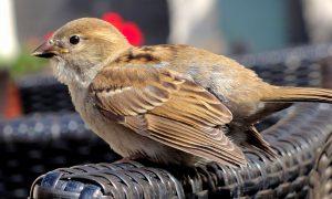 lavori in campagna a luglio - Uccello