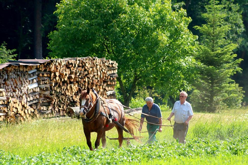 lavori in campagna a settembre - campagna