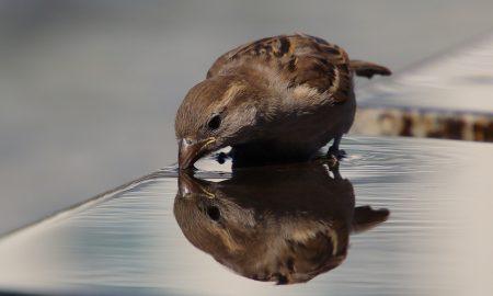 lavori in campagna ad agosto - Uccello che beve
