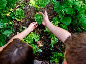 Orti urbani - Giardinaggio di bambini