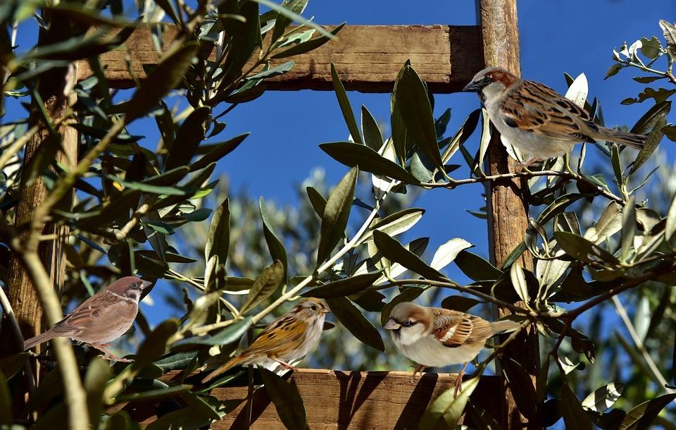 orto a novembre - Passerotti tra i rami