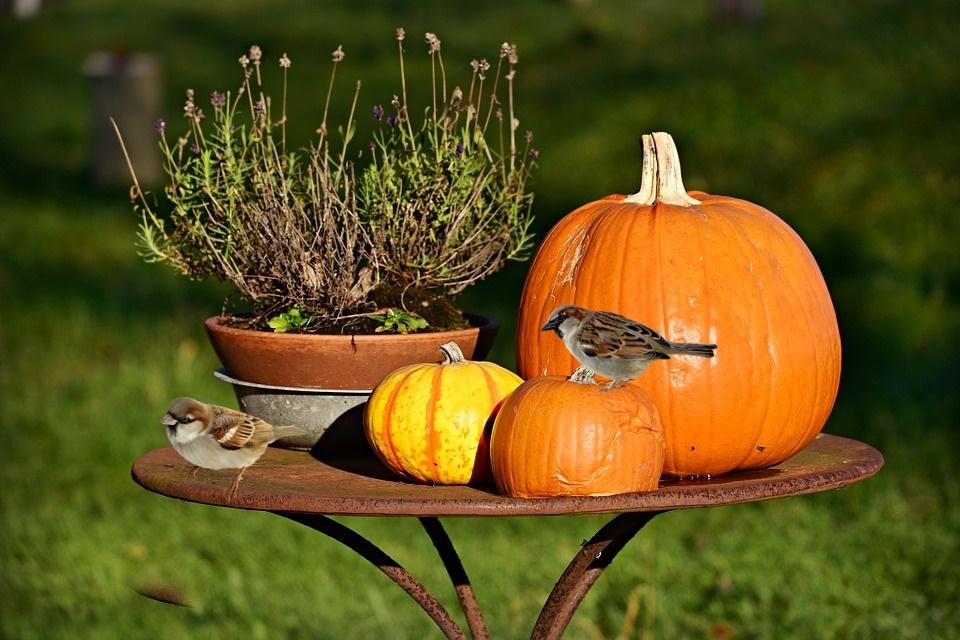 orto a novembre - Zucche