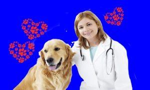 Pet therapy a Frosinone - Veterinaria con un cane