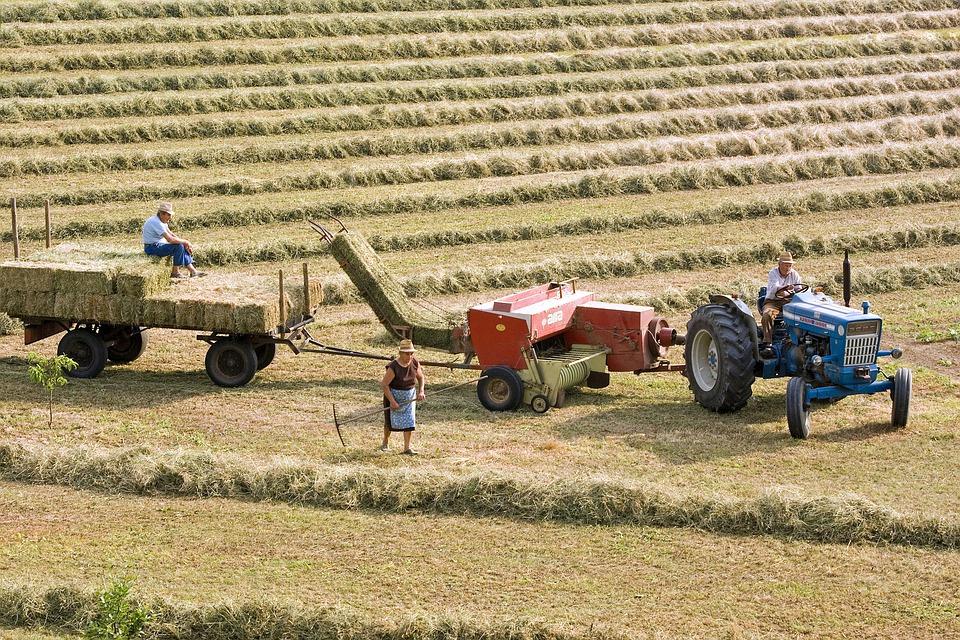 Lavori in campagna a Giugno - Contadini al lavoro