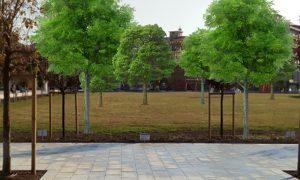 Alberi a Frosinone - il Matusa con gli alberi
