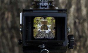 abbattimento retta del nido - Camera di controllo domestica