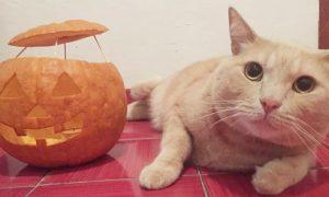Halloween - Alex E La Zucca intagliata