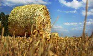 programma di sviluppo rurale - Balle Di Fieno nel Lazio