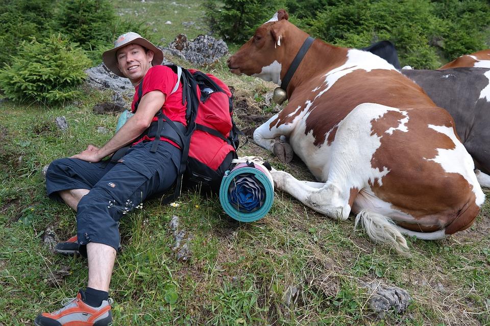 Trekking sul monte Meta - Ragazzo E Mucca distesi