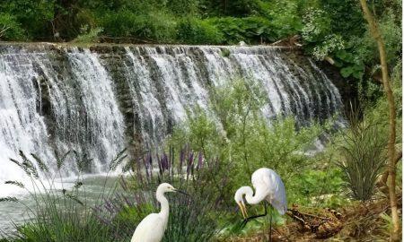 Airone bianco a Frosinone - Dello Schioppo con gli aironi