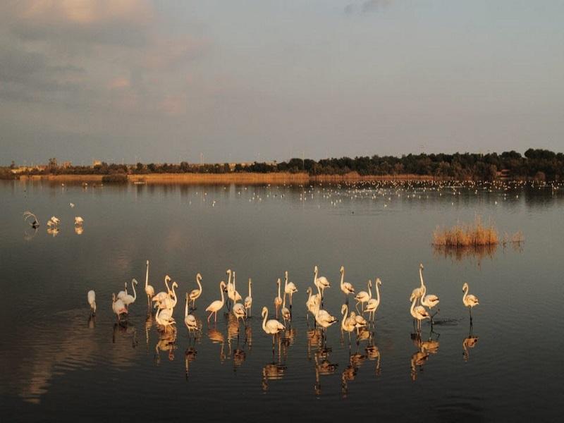 Riserva naturale Gela, flora e fauna