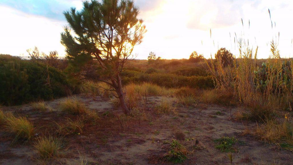 costa nostra - vegetazione della costa tirrenica