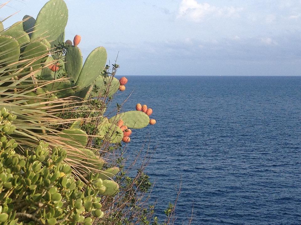 Fichi Dindia su una collina di fronte al mare