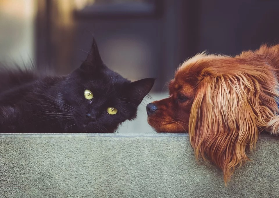 Benedizione Cane E Gatto
