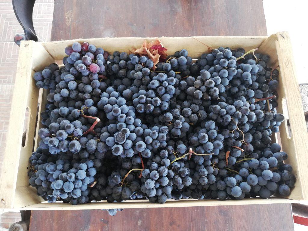 Uva Fresca per la marmellata