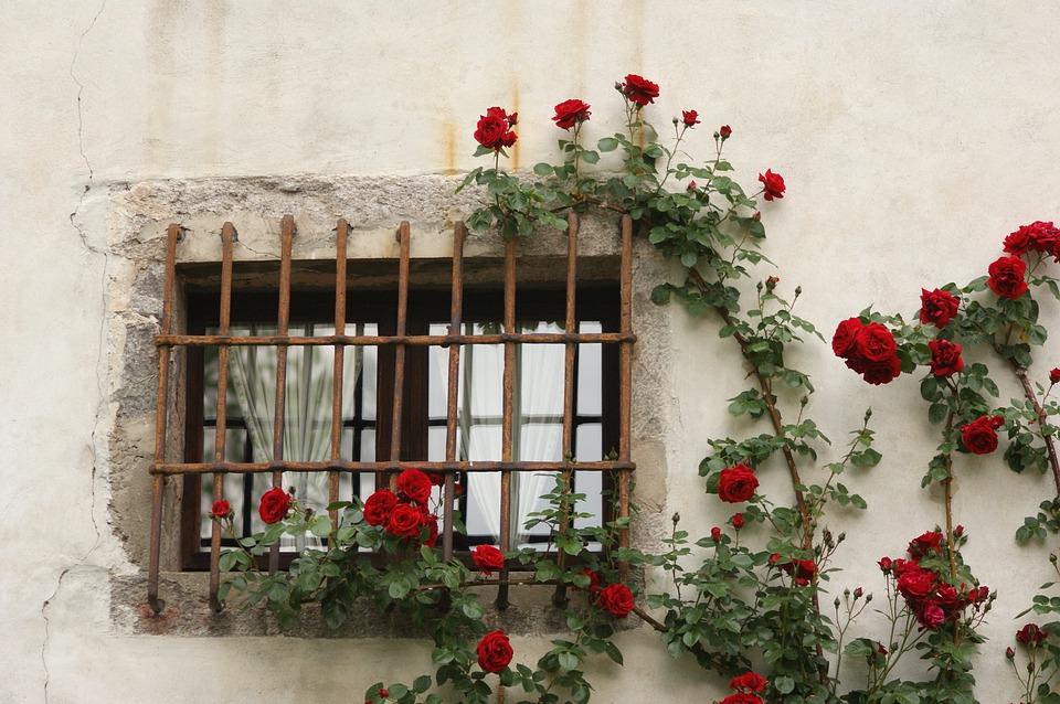 Rose Finestre lameziainfiore