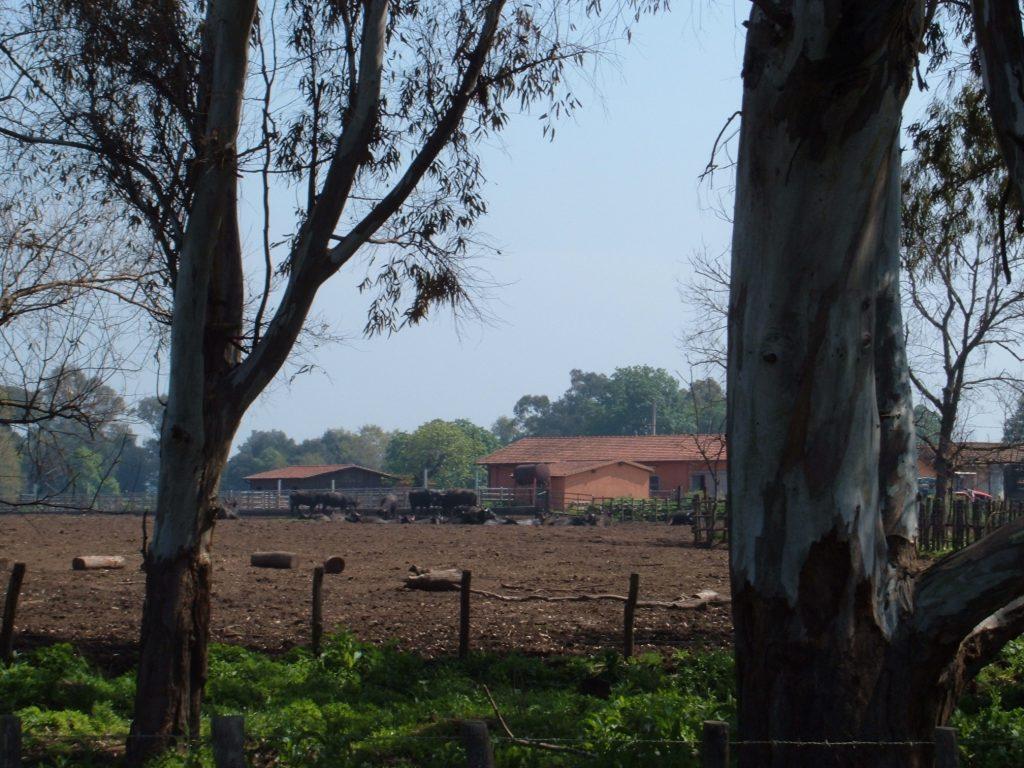 Latina- immagine di fattoria pontina