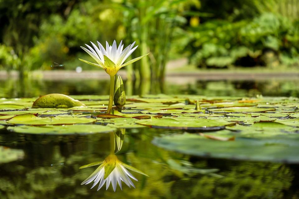 il lago di Fogliano - oasi naturalistica