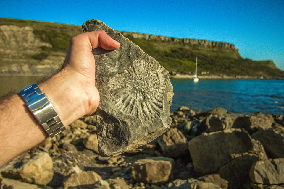Antiquarium Comunale - Fossile Rinvenuto su pietra