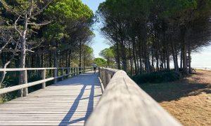 pista ciclabile - Pista ciclabile In Legno