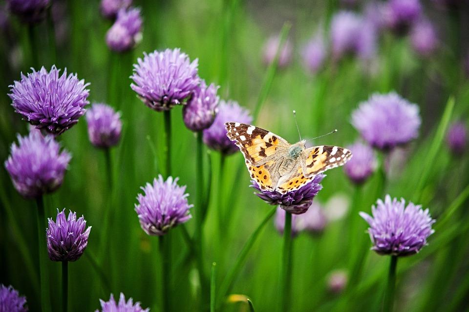 Farfalle e api a ninfa  - Farfalline con fiori