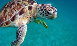 schiusa uova di tartaruga - Tartaruga E Pesciolini in mare