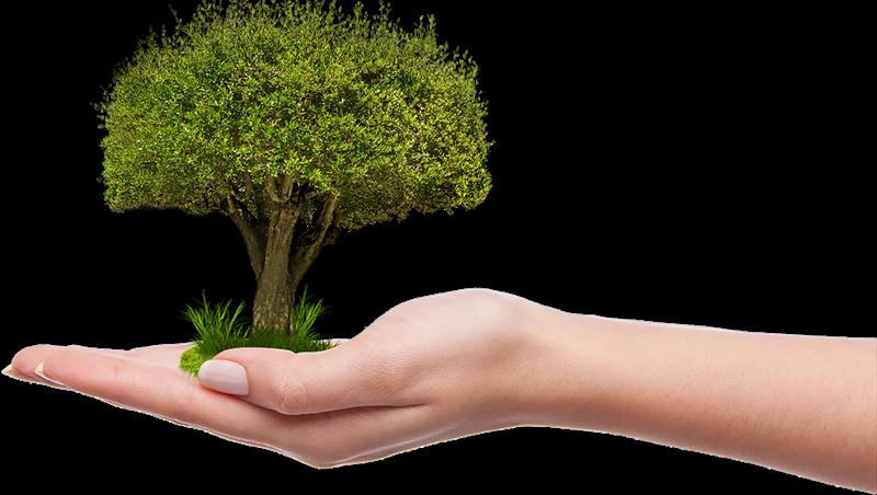 cura del verde pubblico - Albero In Crescita curato