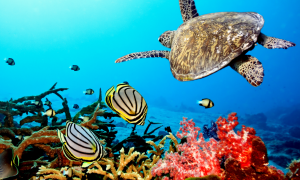 Tartarughe Caretta Caretta -tartarughe e pesci nei fondali