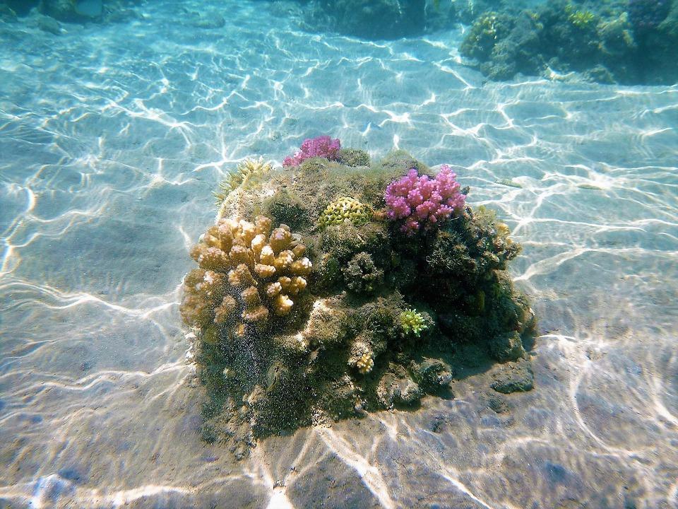 Fondali marini del Lazio - Coralli e concrezioni
