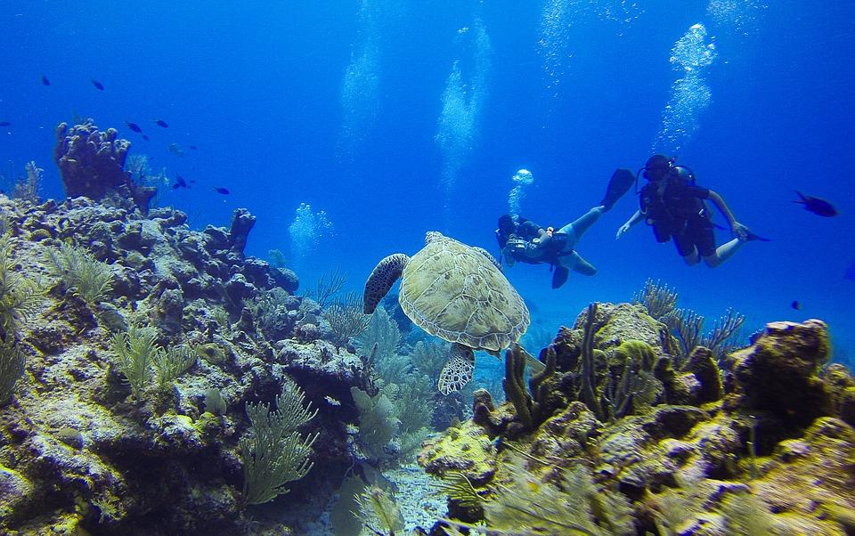 Fondali marini del Lazio - Dei Sub con una tartaruga marina