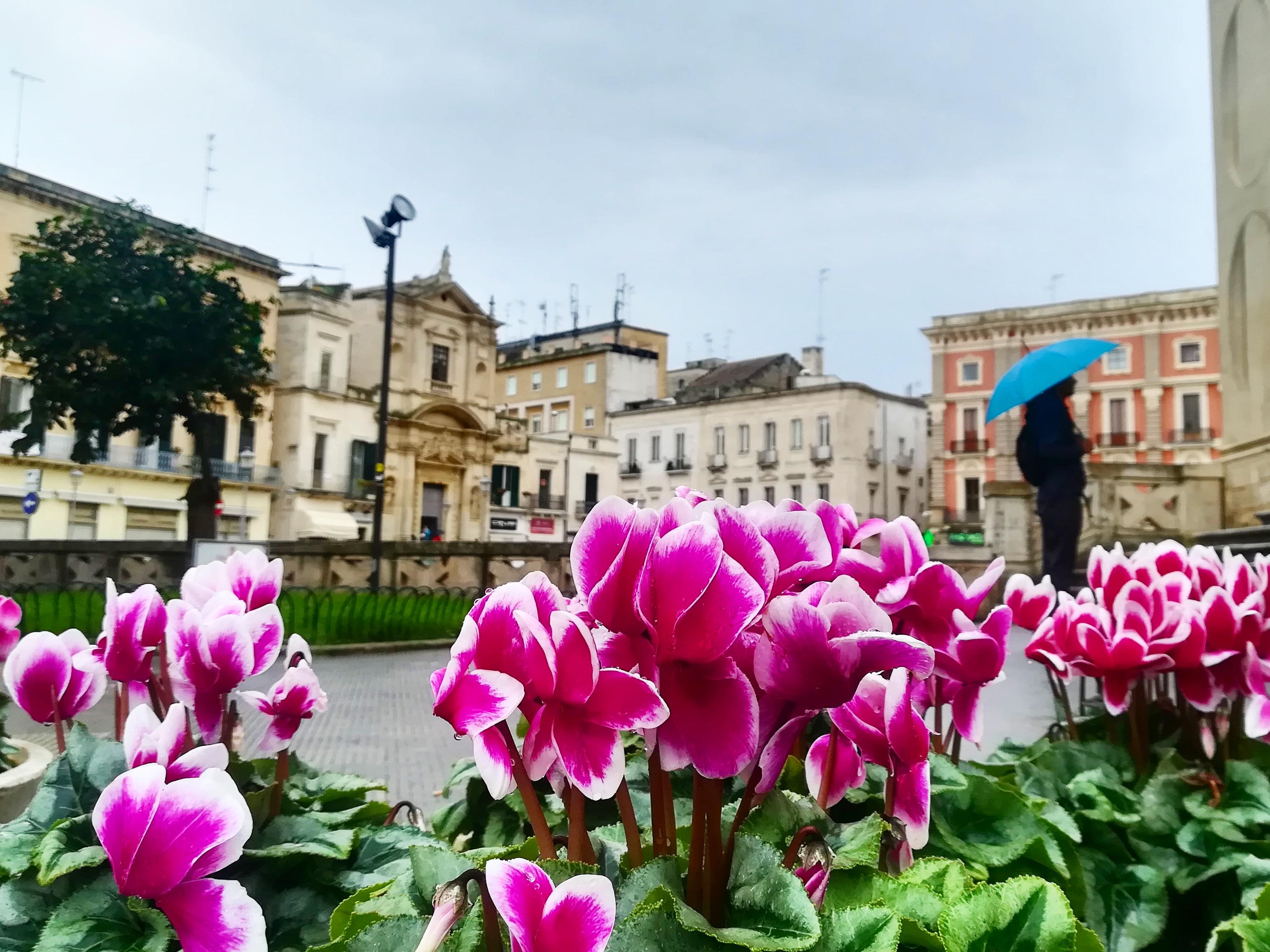 Lecce - immagine di fiori e piazza