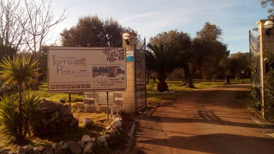 Tenuta Torre Pinta - alberi di ulivo