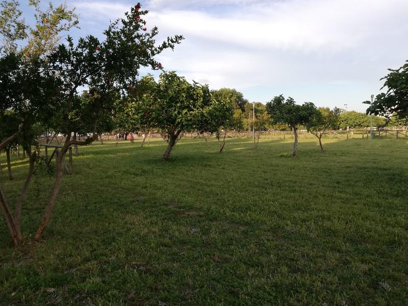il verde del parco di Belloluogo a Lecce